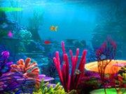 Ztracená rybka 2 hra online